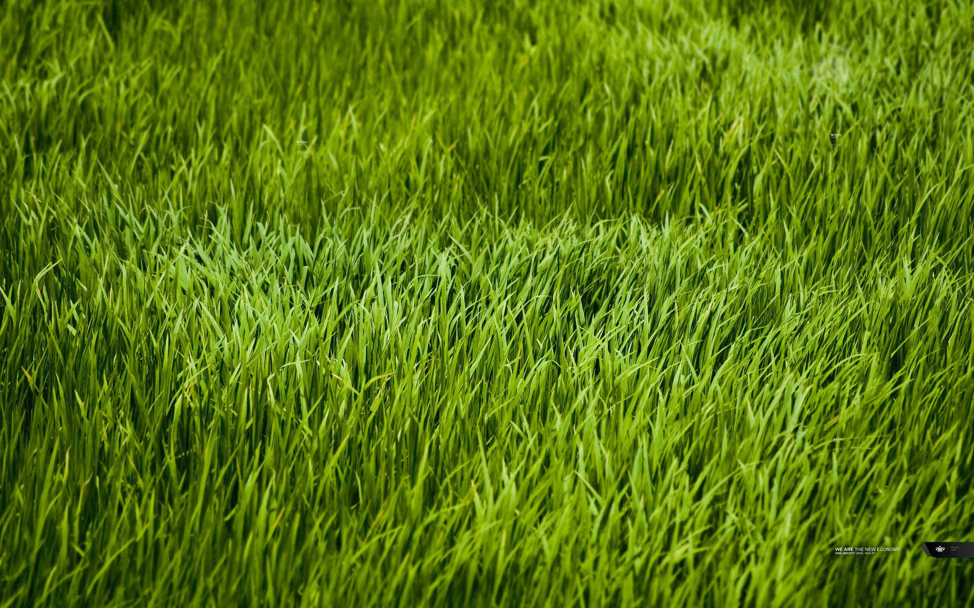 9401_nature_grass2_low